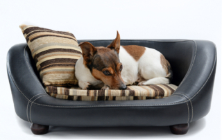 Modern Pet Beds to Suit Your Decor