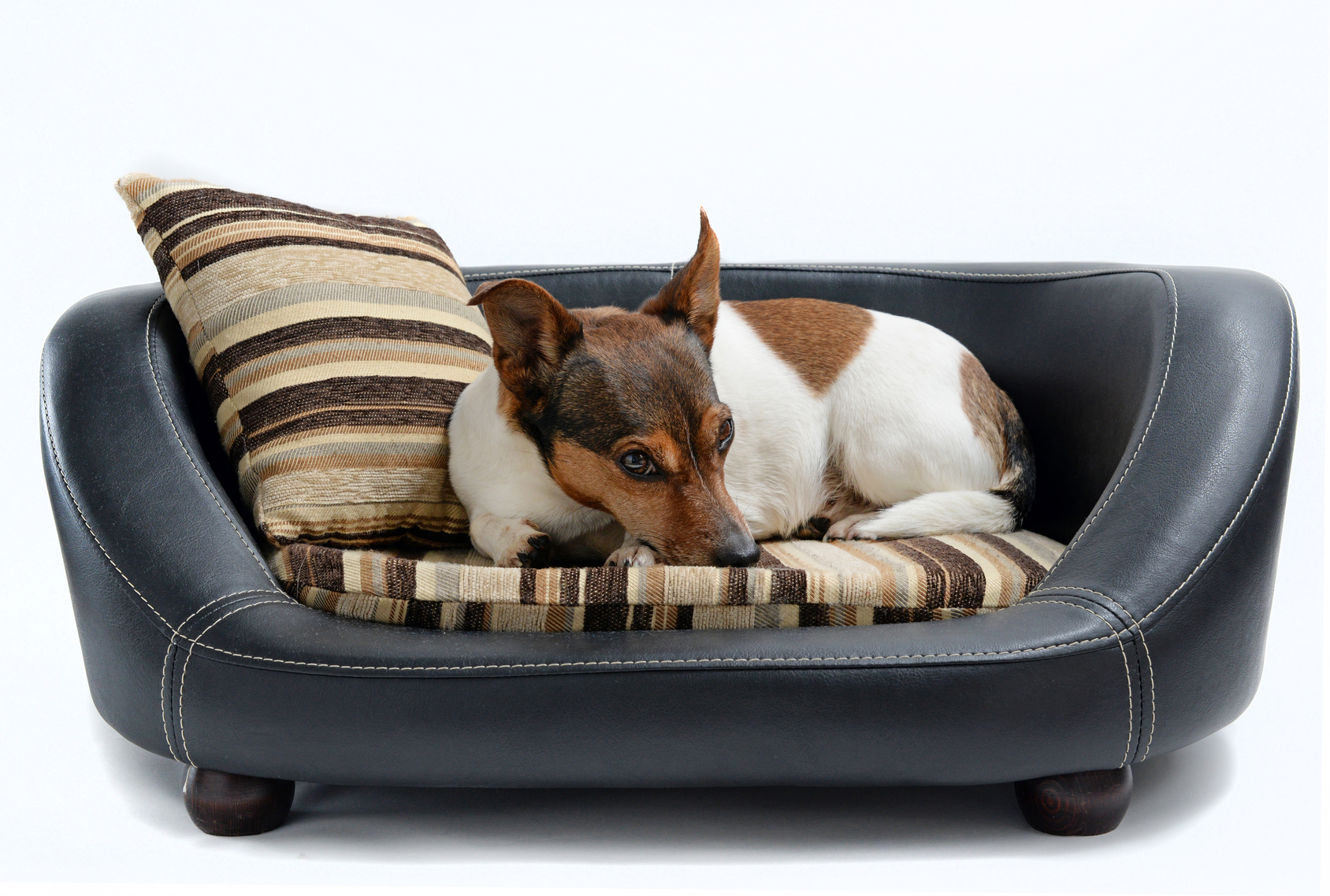 modern design ideas for pet beds that dogs and owners want  - modern pet beds to suit your decor